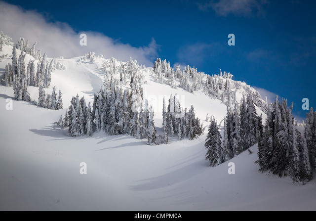 Snow and trees on Mazama Ridge in Mount Rainier National Park in the winter - Stock Image