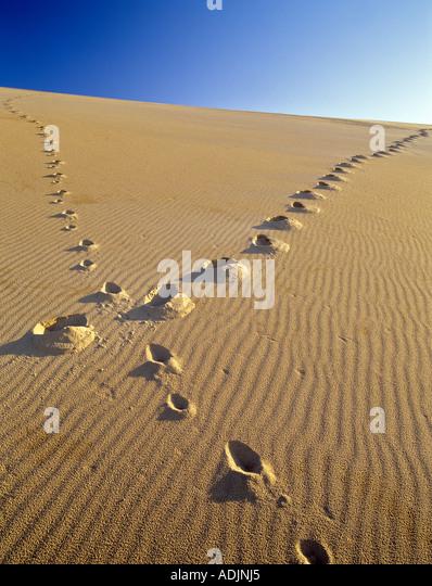 Footprints up sand dune Oregon Dunes National Recreational Area - Stock Image