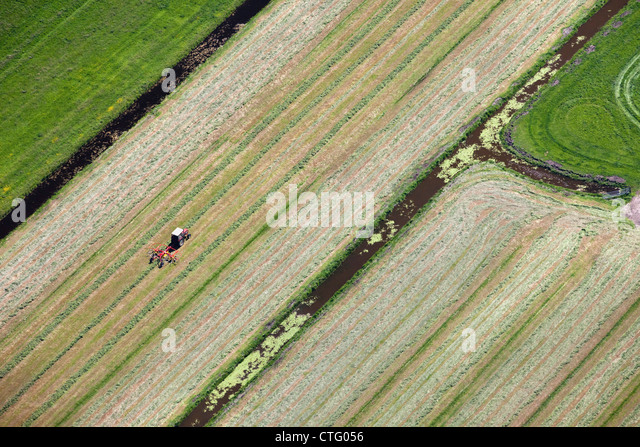 The Netherlands, Zuiderwoude. Aerial. Collecting grass with tractor. - Stock Image