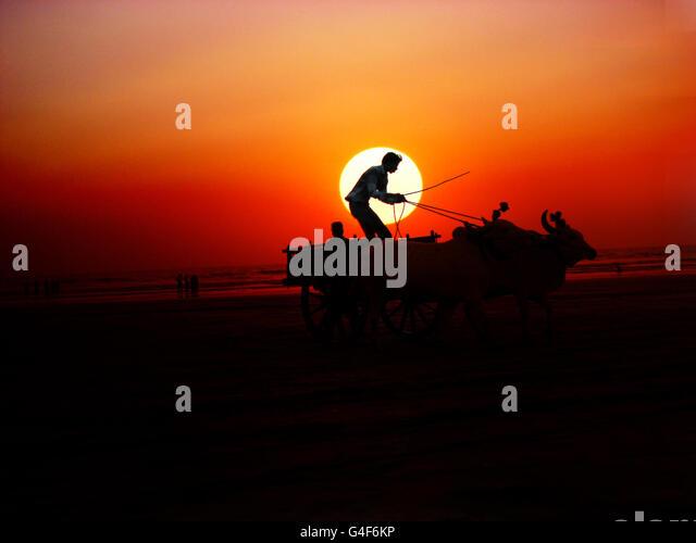 Sunset Bullock Cart - Stock Image