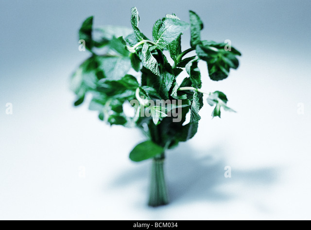 Mint - Stock Image