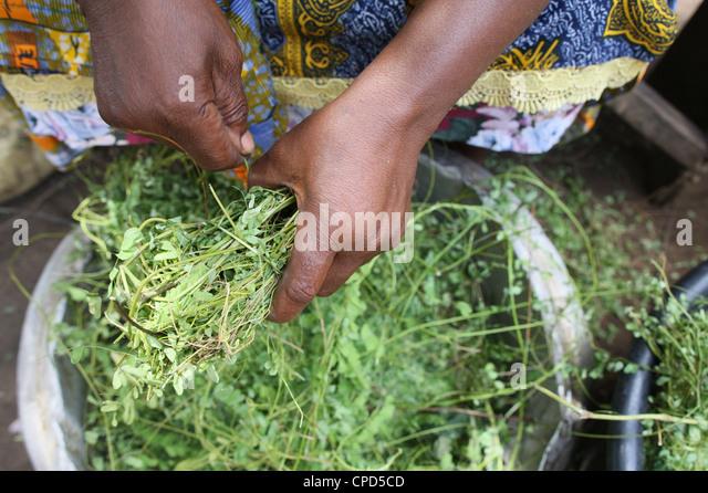 Herbal medicine, Lome, Togo, West Africa, Africa - Stock Image