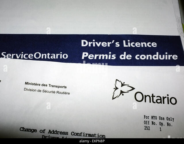 Driver's license paperwork from Service Ontario. - Stock Image