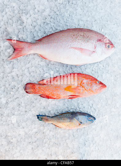 Varieties of fish on ice bed - Stock Image
