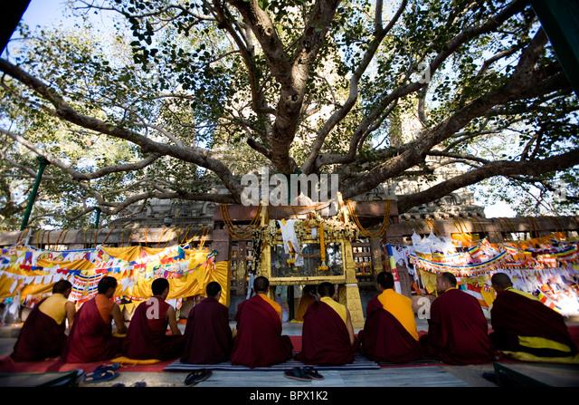 Tibetan monks praying under the bodhi tree where the Buddha reached enlightenment at Mahabodhi Temple, Bodhgaya, - Stock Image