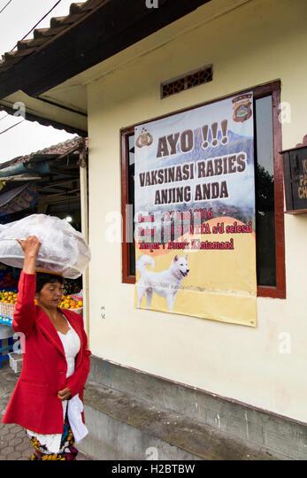 Indonesia, Bali, Batur, Kalanganyar, public and animal health, rabies dog vaccination poster - Stock Image
