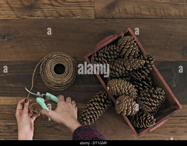 A person using secateurs or cutters on string A box of pine cones - Stock Image