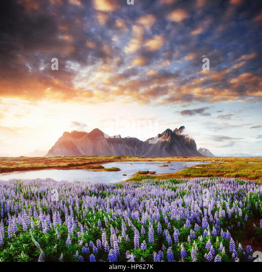 The picturesque landscapes of forests and mountains  Iceland - Stock Image