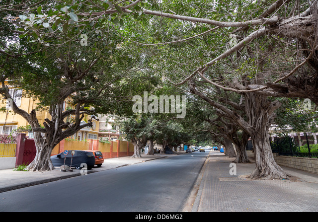 Dakar, Senegal. Rue du Marechal Foch, a tree-lined street near the National assembly. - Stock Image