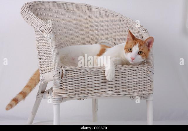 hauskatze dunkelrot weiss liegende felis silvestris stock photos hauskatze dunkelrot weiss. Black Bedroom Furniture Sets. Home Design Ideas