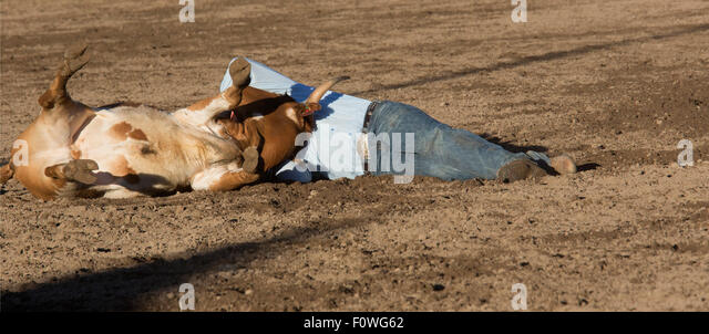 Estes Park, Colorado - Steer wrestling at the Rooftop Rodeo. - Stock Image