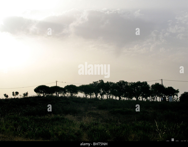 A line of trees on the horizon - Stock Image