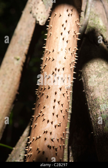 Rusty pipe with spikes - Stock Image