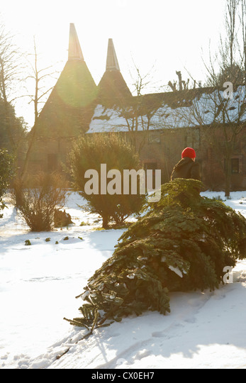 Back View of Man Dragging Christmas Tree on Snow - Stock Image