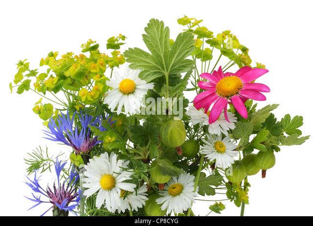 June bouquet postcard with various plants, isolated on white. - Stock Image