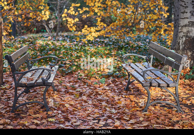 Empty benches among fallen autumn leaves nostalgia - Stock-Bilder