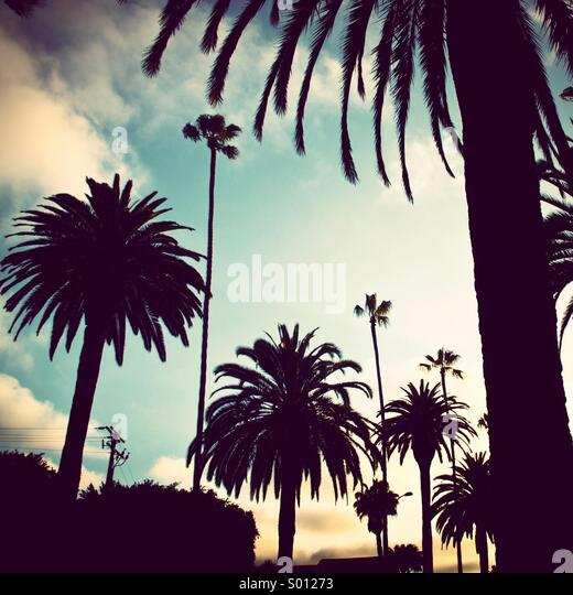 Palm trees in silhouette. Beverly Hills, California. - Stock Image