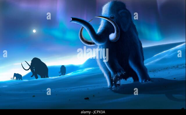 Artwork of the woolly mammoth (Mammuthus primigenius), or tundra mammoth. This animal lived during the Pleistocene - Stock-Bilder