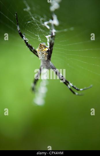 spider, Negros, The Visayas, Philippines - Stock-Bilder