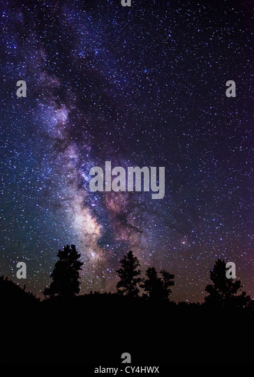USA, Utah, Bryce Canyon, Milky Way and silhouetted trees - Stock Image