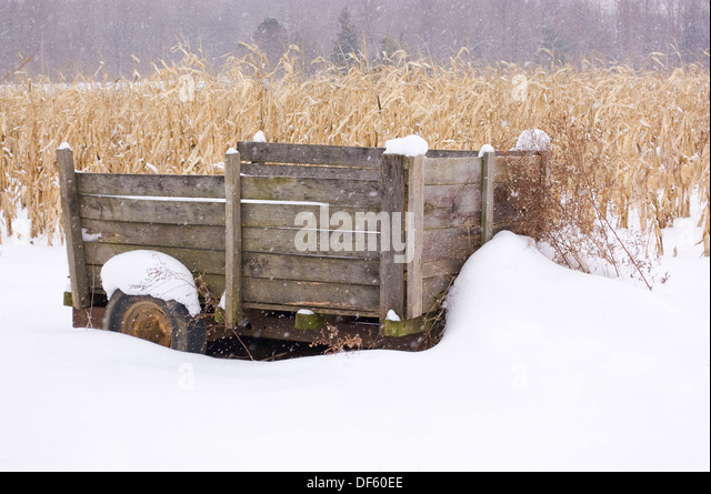Rustic wagon in snowy cornfield - Stock Image