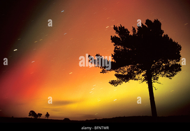 Aurora Borealis and Scots Pine, Scotland. - Stock Image