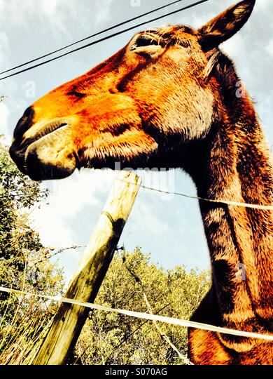 Horse and Fence - Stock Image