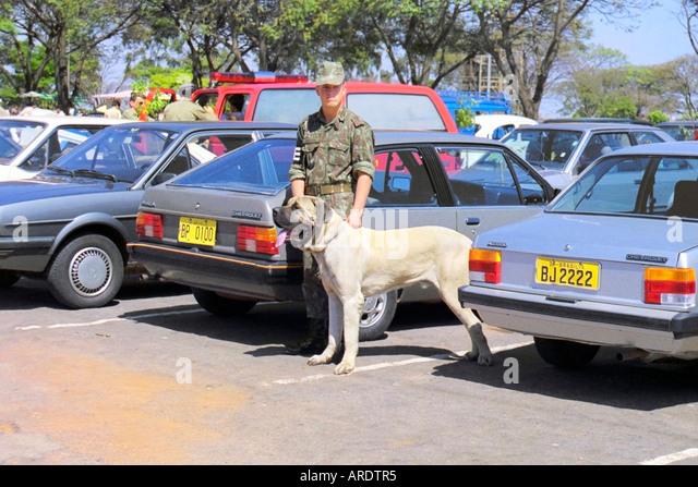 Brazilian Army Soldier and Brazilian Fila Mastiff - Stock Image