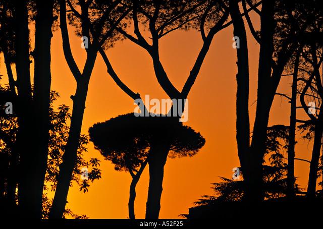 Piazza Garibadi, Rome, Italy - Stock Image
