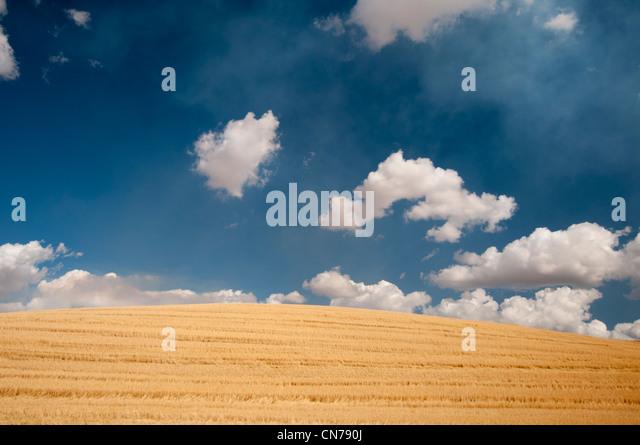 Wheat fields and puffy clouds in Waitsburg near Walla Walla, Washington State USA - Stock Image