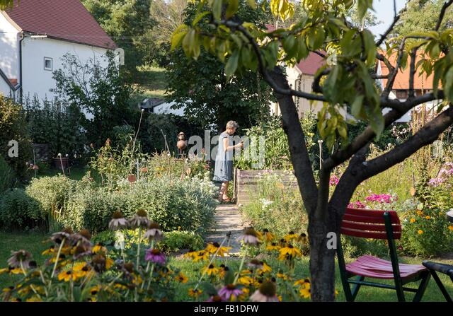 Mature woman gardening - Stock Image