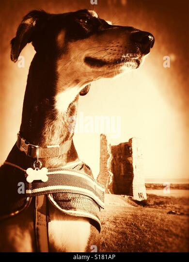 My dog is my castle. - Stock-Bilder