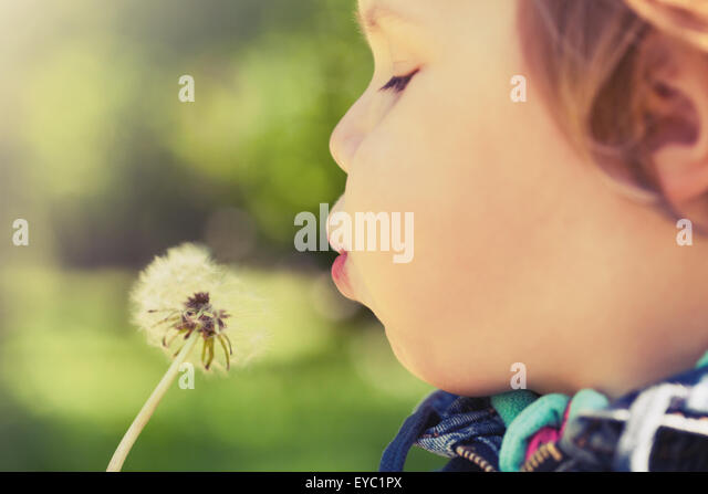 Caucasian blond baby girl blows on a dandelion flower in a park, vintage toned photo with selective focus - Stock Image
