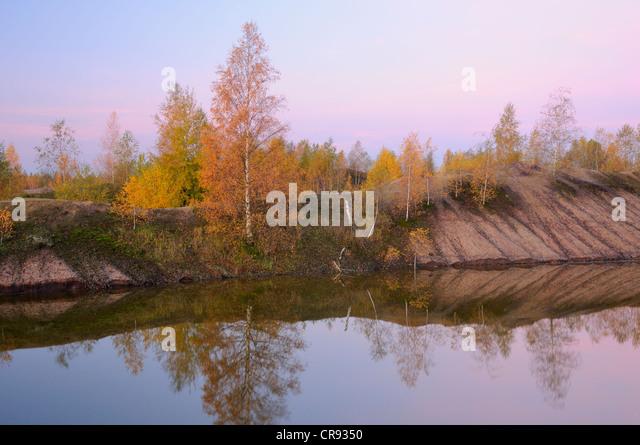 strip mine reclamation trees jpg 422x640