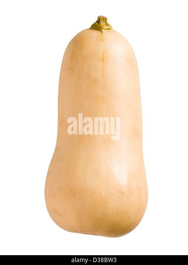 Butternut squash. - Stock Image