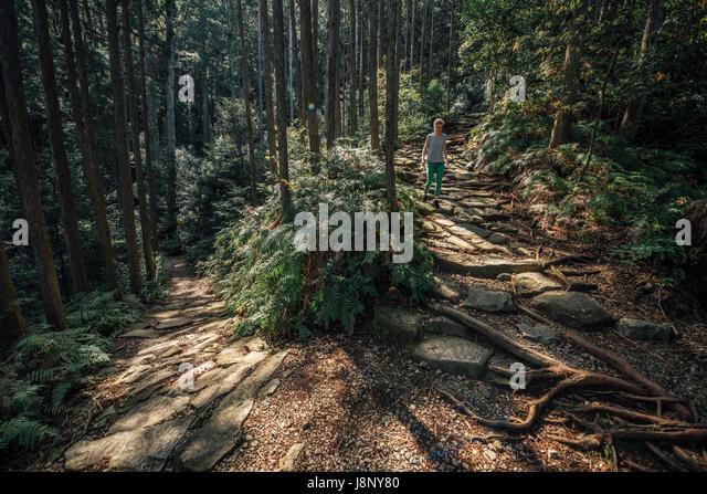 Hiker walking in forest - Stock-Bilder
