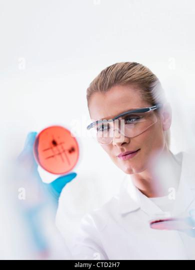 Microbiologist examining cultures - Stock-Bilder