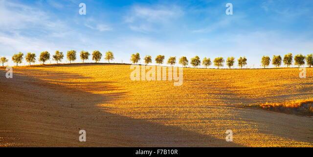 Row of trees, Val d'Orcia, Tuscany, Italy - Stock-Bilder