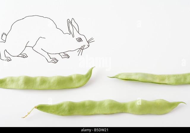 Drawing of rabbit walking across fresh pea pods - Stock-Bilder