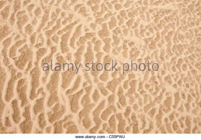 The Netherlands, Loon op Zand, National Park De Loonse en Drunense Duinen. Sand. - Stock-Bilder