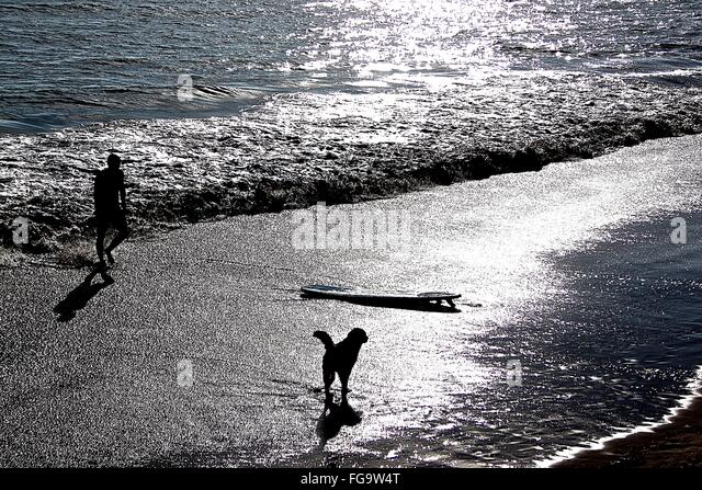 Man And Dog On Shore With Surfboard At Beach - Stock Image
