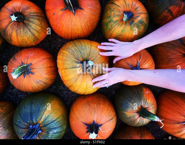 Woman chooses pumpkin - Stock Image