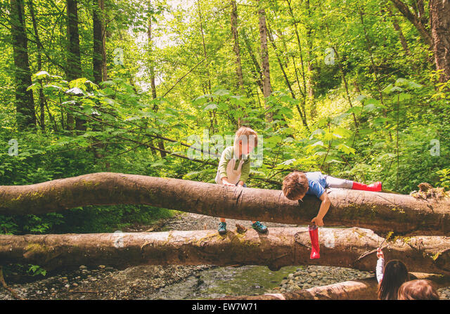 Two young boys climbing over trees by a creek - Stock Image