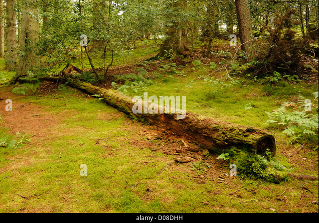 Clocaenog Stock Photos Amp Clocaenog Stock Images Alamy