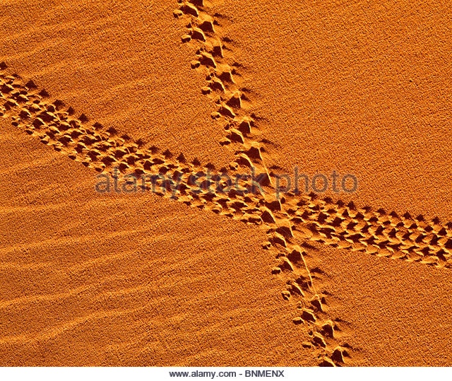 Beetle tracks in sand dunes. Monument Valley, Navajo Indian Reservation, Arizona. - Stock Image