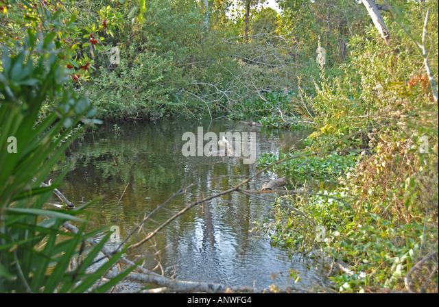 Florida Tiger Creek Preseve - Stock Image
