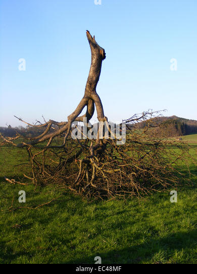Climatic Catastrophe, Climate Change, Tree - Stock Image
