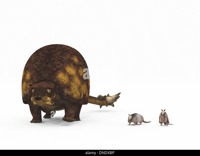 the modern armadillo and the prehistoric glyptodon Ancient humans hunted the glyptodon, a massive armadillo known as the glyptodon, the massive armadillo lived during the southern region of modern.