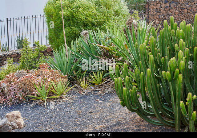 Cactii stock photos cactii stock images alamy for Typical landscaping plants