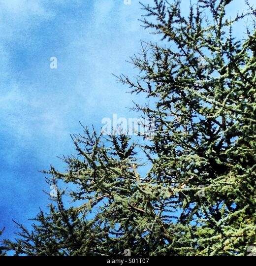 Green tree, blue sky - Stock Image